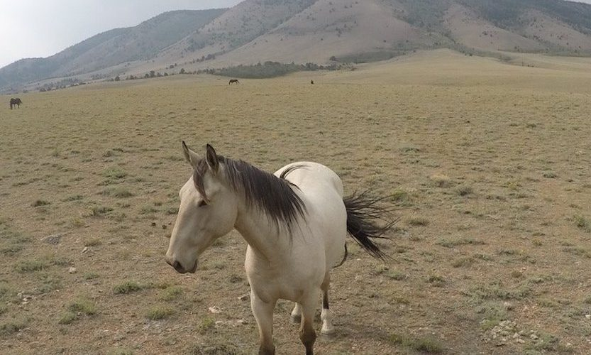EcoSanctuary: Our Wild Mustang Day - Gallery Slide #12