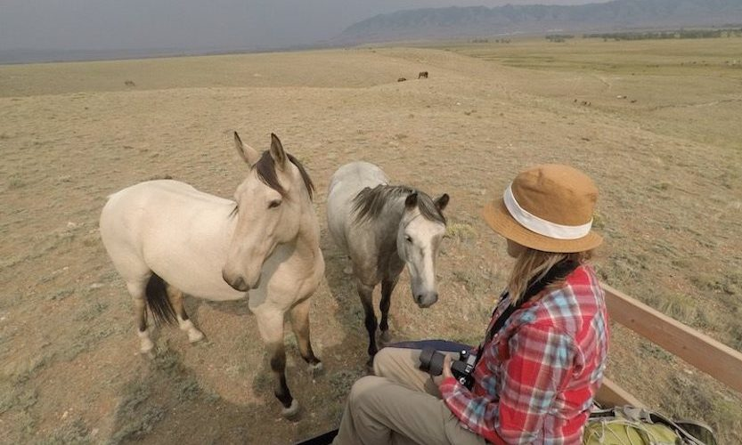 EcoSanctuary: Our Wild Mustang Day - Gallery Slide #7