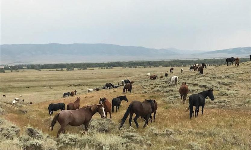 EcoSanctuary: Our Wild Mustang Day - Gallery Slide #6