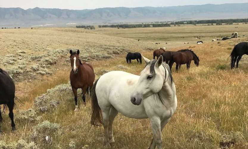 EcoSanctuary: Our Wild Mustang Day - Gallery Slide #11