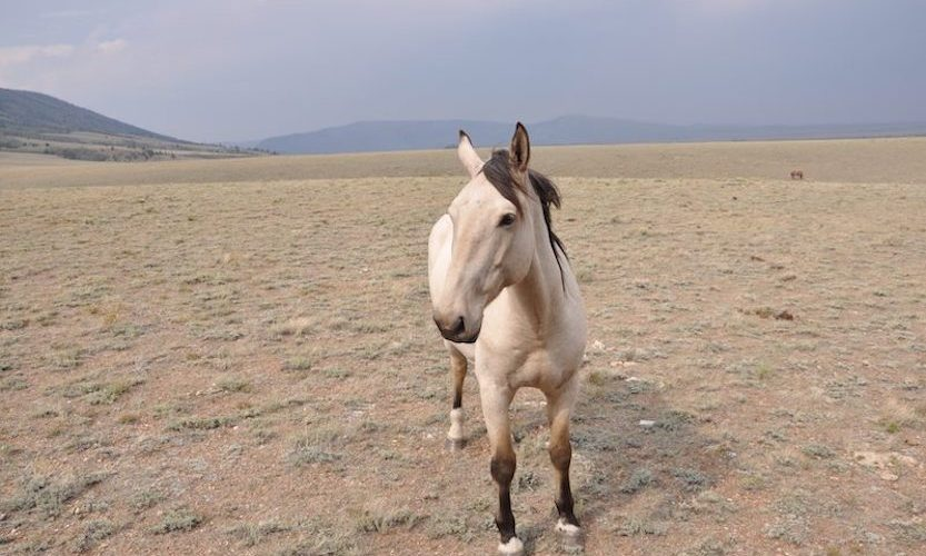 EcoSanctuary: Our Wild Mustang Day - Gallery Slide #4