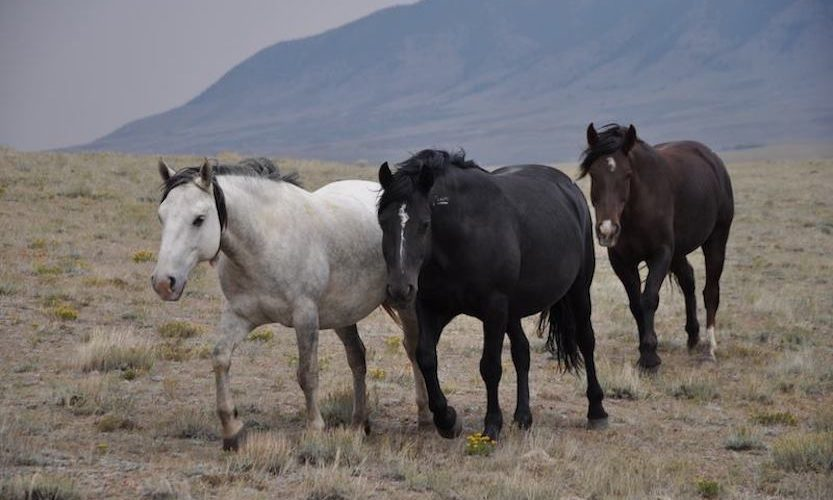 EcoSanctuary: Our Wild Mustang Day - Gallery Slide #8