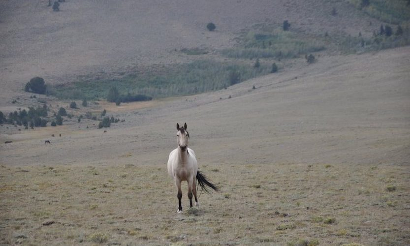 EcoSanctuary: Our Wild Mustang Day - Gallery Slide #9