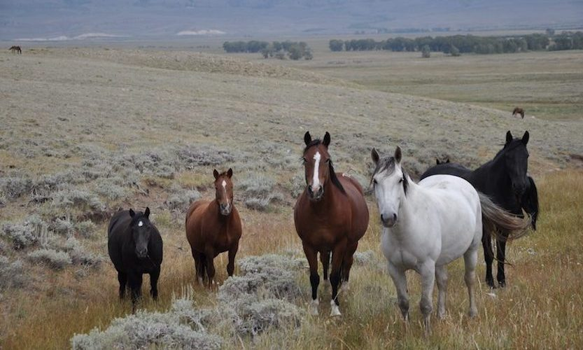 EcoSanctuary: Our Wild Mustang Day - Gallery Slide #2