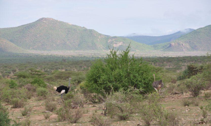 Our African Safari in Samburu ! - Gallery Slide #20