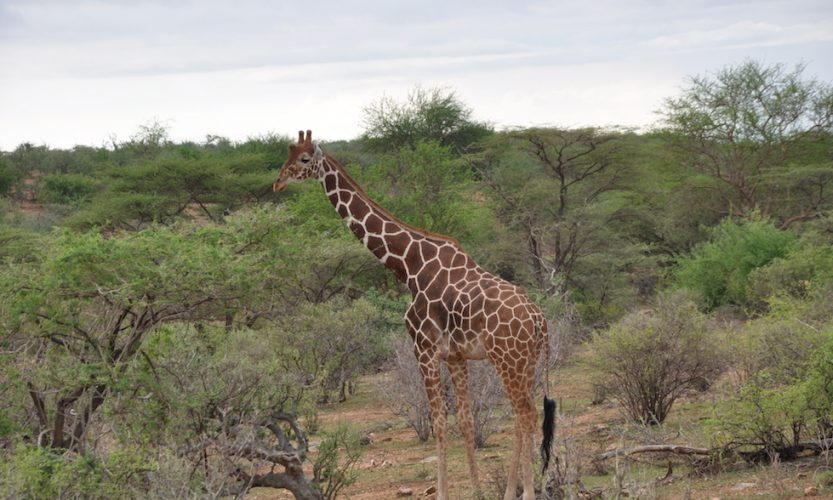 Our African Safari in Samburu ! - Gallery Slide #22