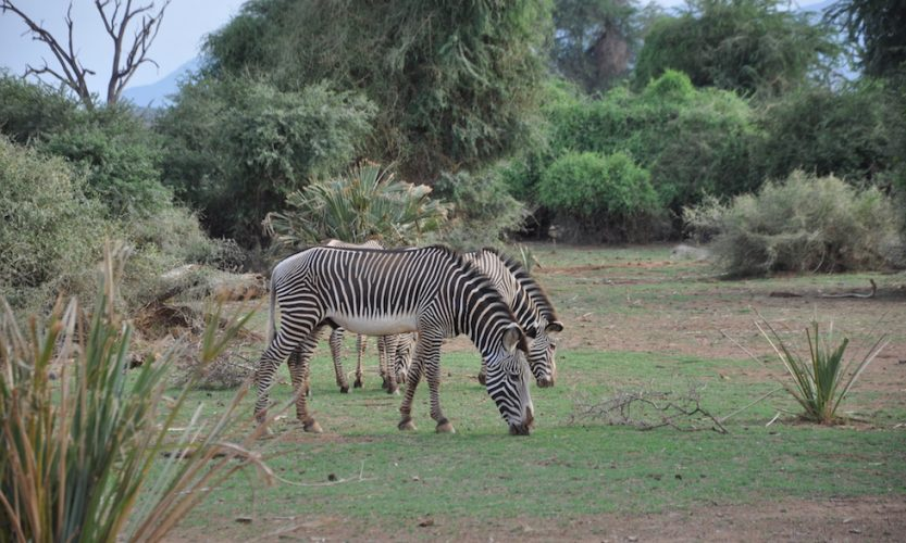 Our African Safari in Samburu ! - Gallery Slide #4
