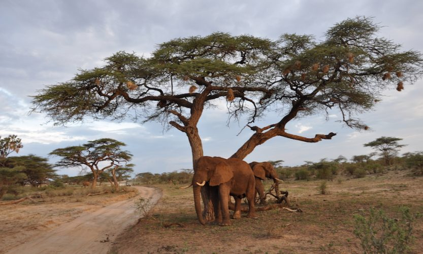 Our African Safari in Samburu ! - Gallery Slide #6