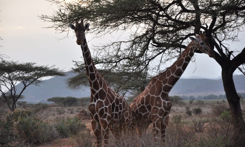 Our African Safari in Samburu ! - Gallery Slide #16