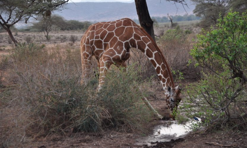 Our African Safari in Samburu ! - Gallery Slide #9