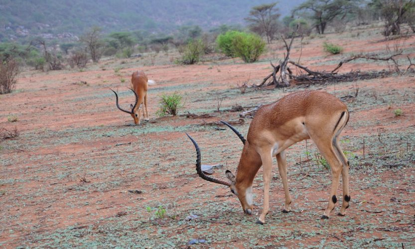 Our African Safari in Samburu ! - Gallery Slide #11