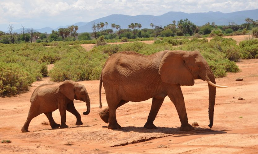 Our African Safari in Samburu ! - Gallery Slide #14