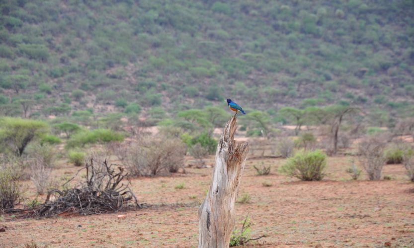 Our African Safari in Samburu ! - Gallery Slide #15