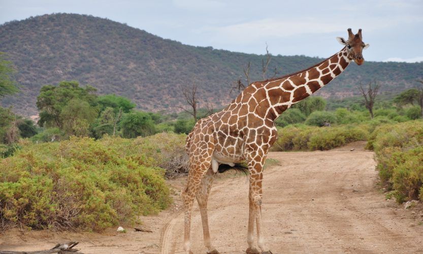 Our African Safari in Samburu ! - Gallery Slide #2