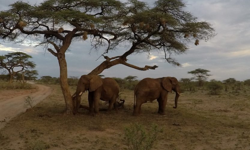 Our African Safari in Samburu ! - Gallery Slide #24