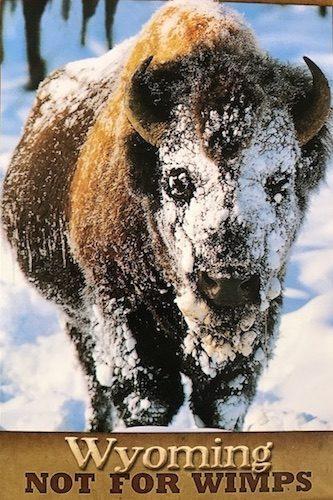 Bye-Bye for Now, Wyoming - Gallery Slide #8