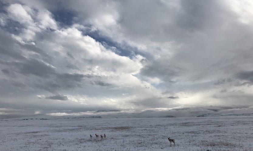 Bye-Bye for Now, Wyoming - Gallery Slide #4
