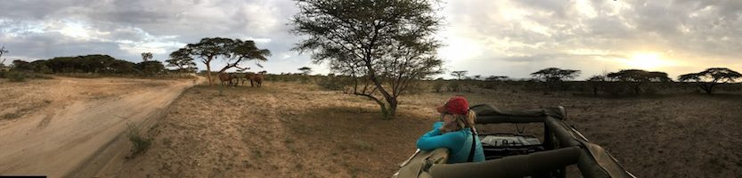 Our African Safari in Samburu ! - Gallery Slide #42